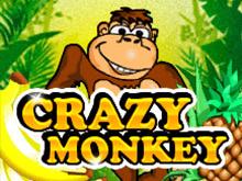 Онлайн Crazy Monkey в казино